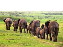 Elephant family-small