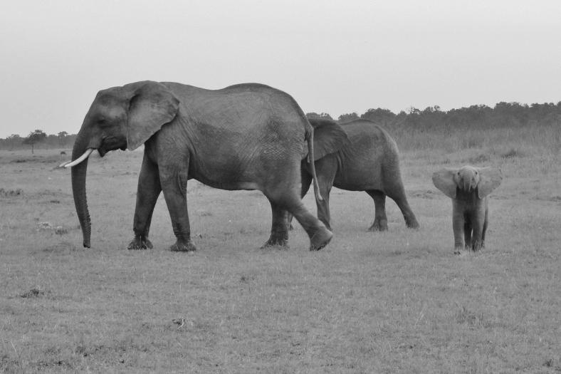 Elephant w baby