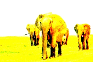 Elephants are Coming - color