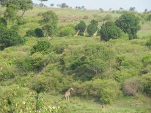 View from Salt Springs Mara Camp